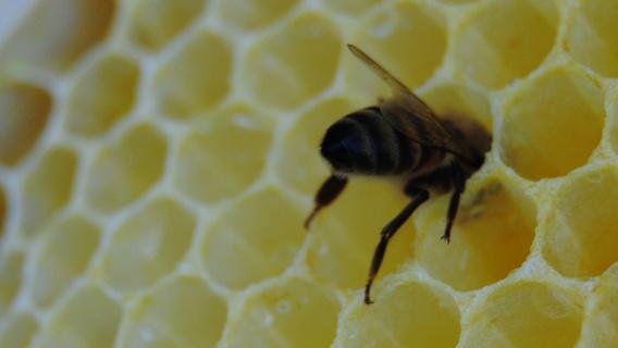 Bist du schon Bienenpate?